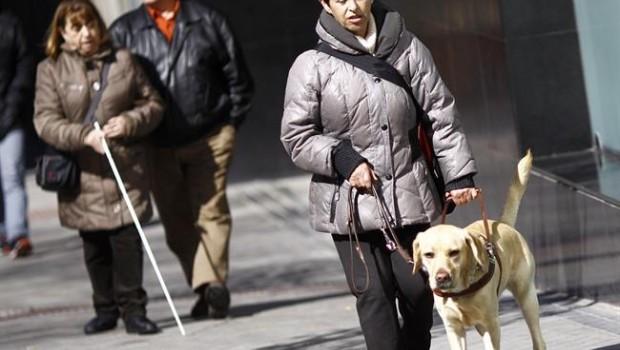 ep discapacidad discapacitado ciego personas ciegasperro guia lazarillo 20180801173602
