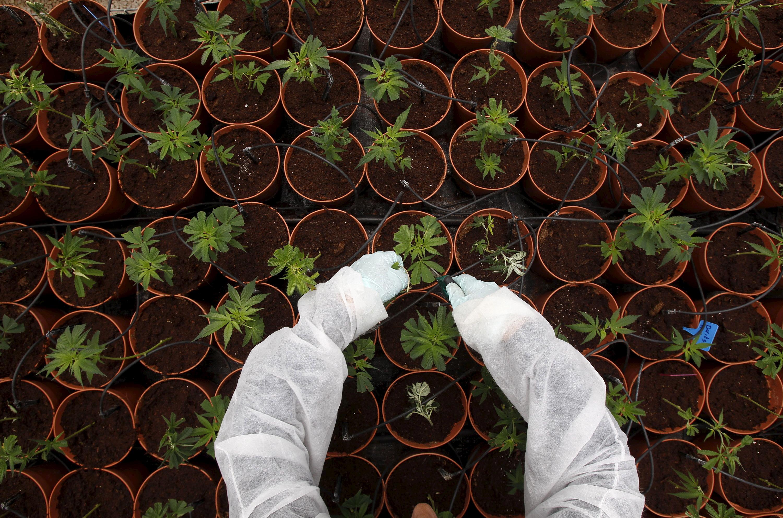 el-cannabis-conquista-wall-street-y-su-índice-sube-un-34-en-lo-que-va-de-2019