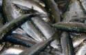ep sardinasmalaga pescado fresco pescador mercado