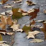 ep recursosviento temporal hojas otono